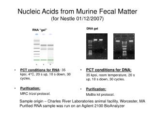 Nucleic Acids from Murine Fecal Matter (for Nestle 01/12/2007)