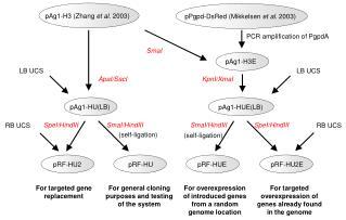 pAg1-H3 (Zhang  et al . 2003)