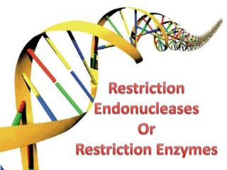 Restriction  Endonucleases Or Restriction Enzymes