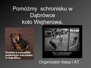 Pomóżmy  schronisku w Dąbrówce  koło Wejherowa.