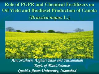 Role of PGPR and Chemical Fertilizers on Oil Yield and Biodiesel Production of Canola Brassica napus L.