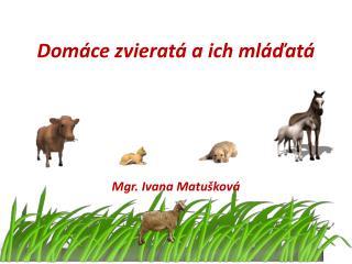 Domáce zvieratá a ich mláďatá