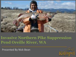 Invasive Northern Pike Suppression Pend Oreille River, WA