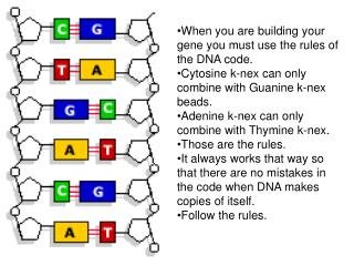 When you are building your gene you must use the rules of the DNA code.
