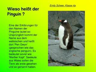 Wieso heißt der  Pinguin  ?