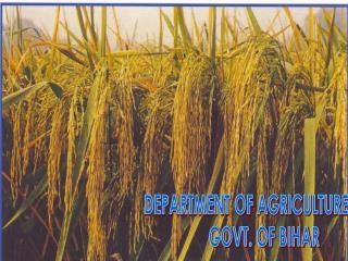 DEPARTMENT OF AGRICULTURE          GOVT. OF BIHAR