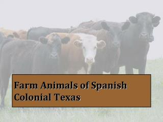 Farm Animals of Spanish Colonial Texas