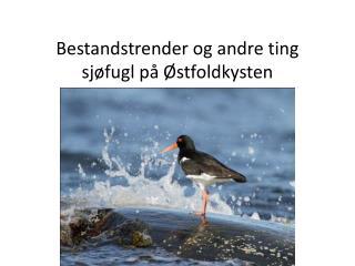 Bestandstrender  og andre ting  sjøfugl på Østfoldkysten