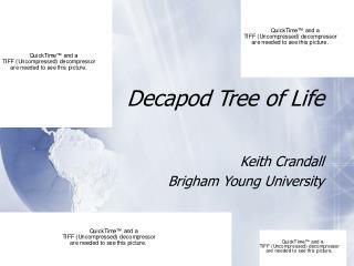 Decapod Tree of Life