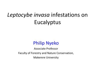 Leptocybe invasa  infestations on Eucalyptus