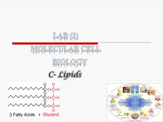 Lab (3) Molecular Cell  Biology C- Lipids