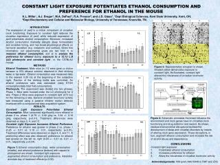 CONSTANT LIGHT EXPOSURE POTENTIATES ETHANOL CONSUMPTION AND PREFERENCE FOR ETHANOL IN THE MOUSE