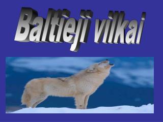 Baltieji vilkai