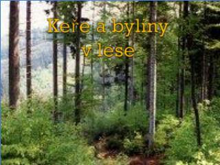 Keře a byliny v lese