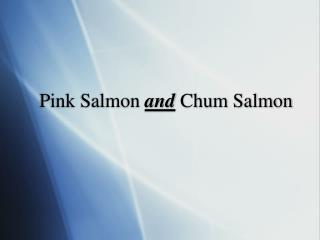 Pink Salmon  and  Chum Salmon
