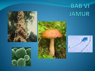 BAB VI JAMUR