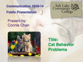 Title:  Cat Behavior Problems
