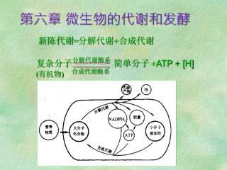 第六章 微生物的代谢和发酵