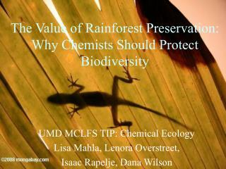 The Value of Rainforest Preservation: Why Chemists Should Protect Biodiversity