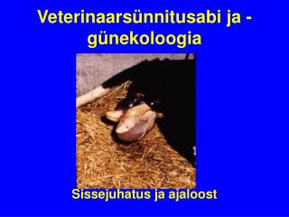Veterinaarsünnitusabi ja - günekoloogia