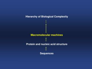 Hierarchy of Biological Complexity Macromolecular machines Protein and nucleic acid structure