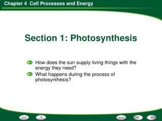 How does the sun supply living things with the energy they need?