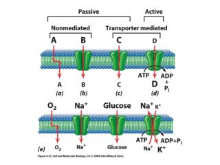 The Na + -K +  ATPase Pump