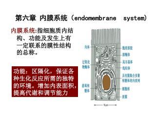 第六章 内膜系统( endomembrane  system)