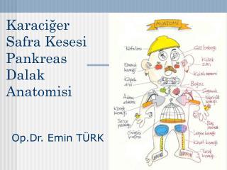 Karaciğer  Safra Kesesi Pankreas Dalak Anatomisi