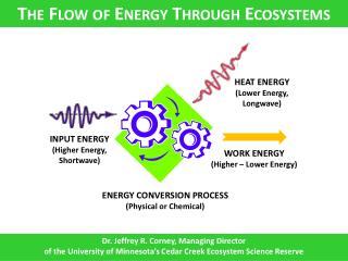 The Flow of Energy Through Ecosystems