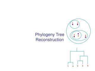 Phylogeny Tree Reconstruction