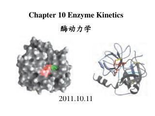 Chapter 10 Enzyme Kinetics 酶动力学 2011.10.11