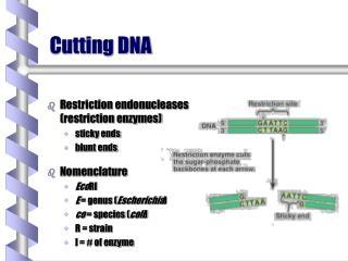 Cutting DNA
