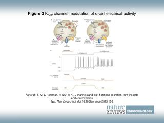 Figure 3  K ATP  channel modulation of α‑cell electrical activity