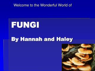 FUNGI By Hannah and Haley