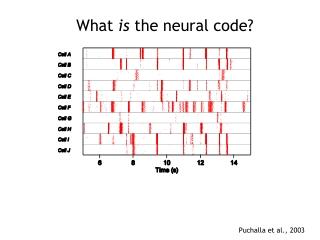 The Neural Code