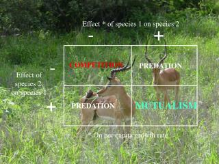 Effect * of species 1 on species 2