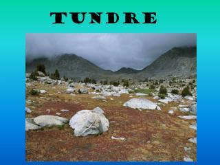 TUNDRE