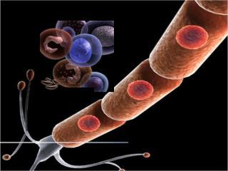 EUKARYOTIC CELL SEEN UNDER LIGHT MICROSCOPE