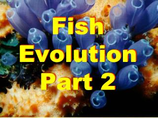 Fish Evolution Part 2