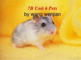 7B Unit 6 Pets by wang wenjian