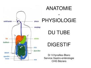 ANATOMIE - PHYSIOLOGIE   DU TUBE   DIGESTIF  Dr V.Hyrailles-Blanc Service Gastro-ent rologie CHG B ziers