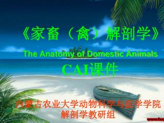 《 家畜(禽)解剖学 》 The Anatomy of Domestic Animals  CAI 课件