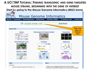 Start by going to the Mouse Genome Informatics (MGI) home page