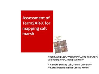 Assessment of TerraSAR-X for mapping salt marsh