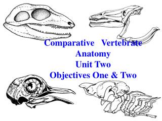 Comparative   Vertebrate Anatomy Unit Two Objectives One & Two