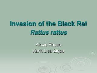 Invasion of the Black Rat  Rattus rattus