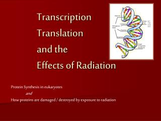 Transcription  Translation  and the  Effects of Radiation