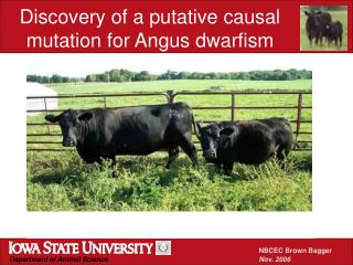 Discovery of a putative causal mutation for Angus dwarfism