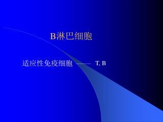 B 淋巴细胞